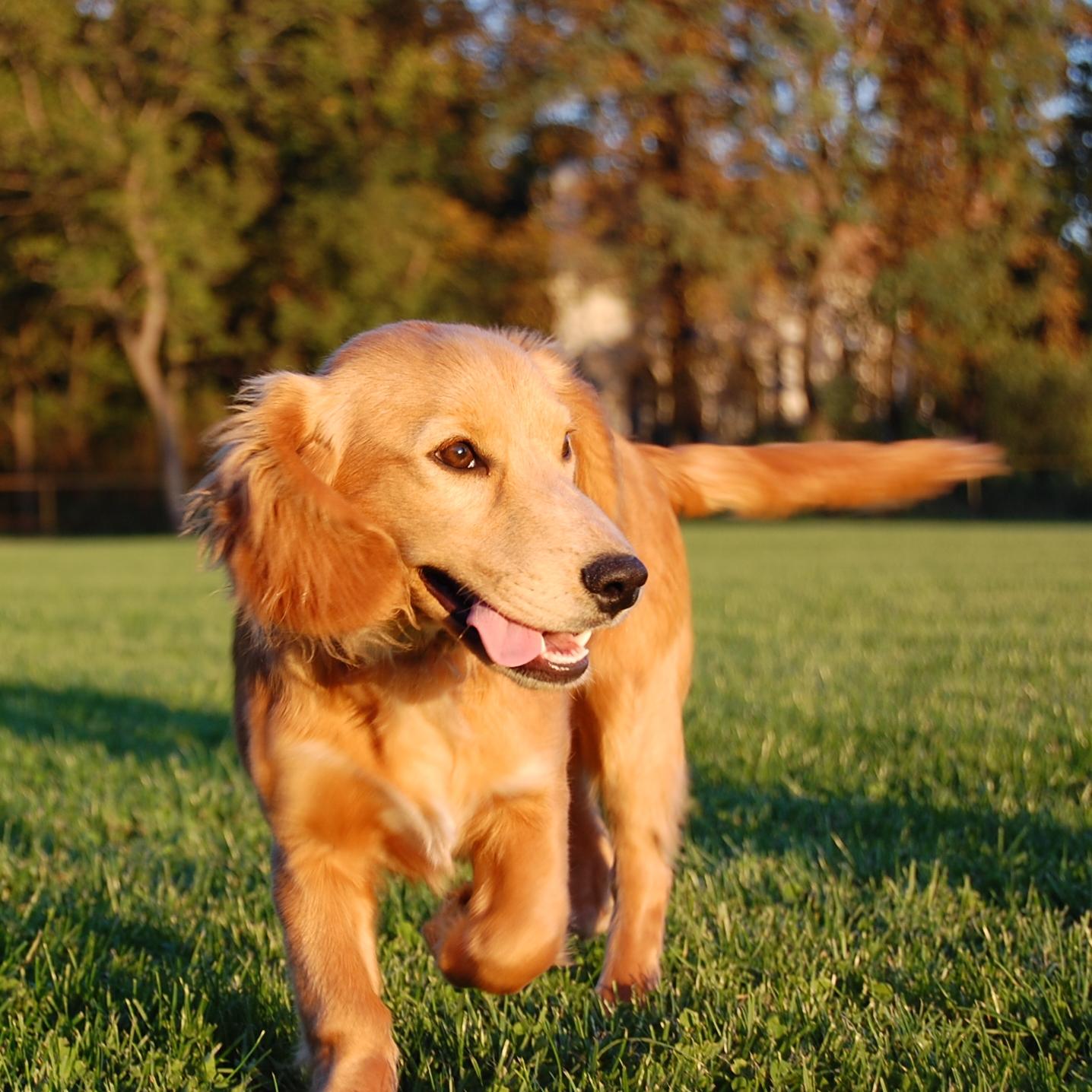 dog-1-1363113