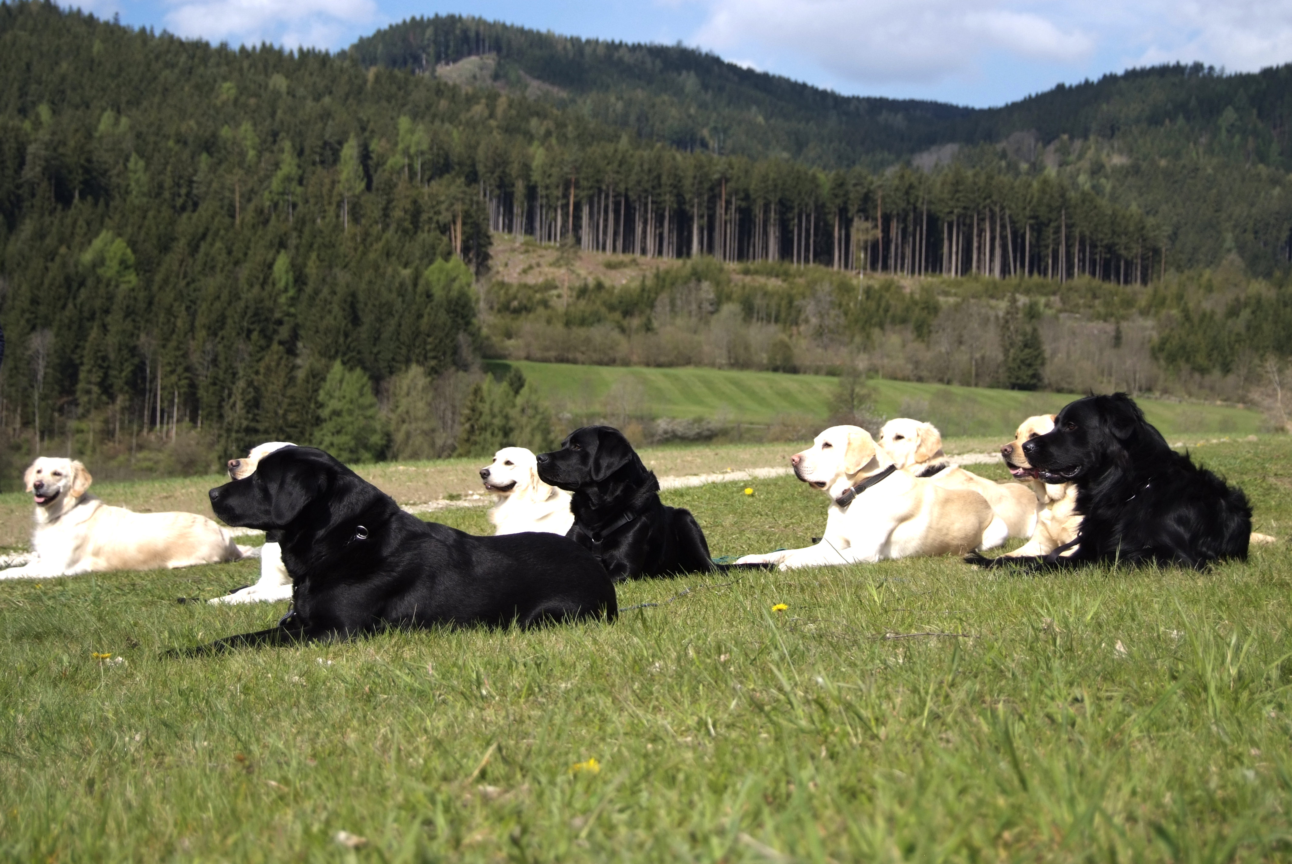 dogs-in-formation-1165304