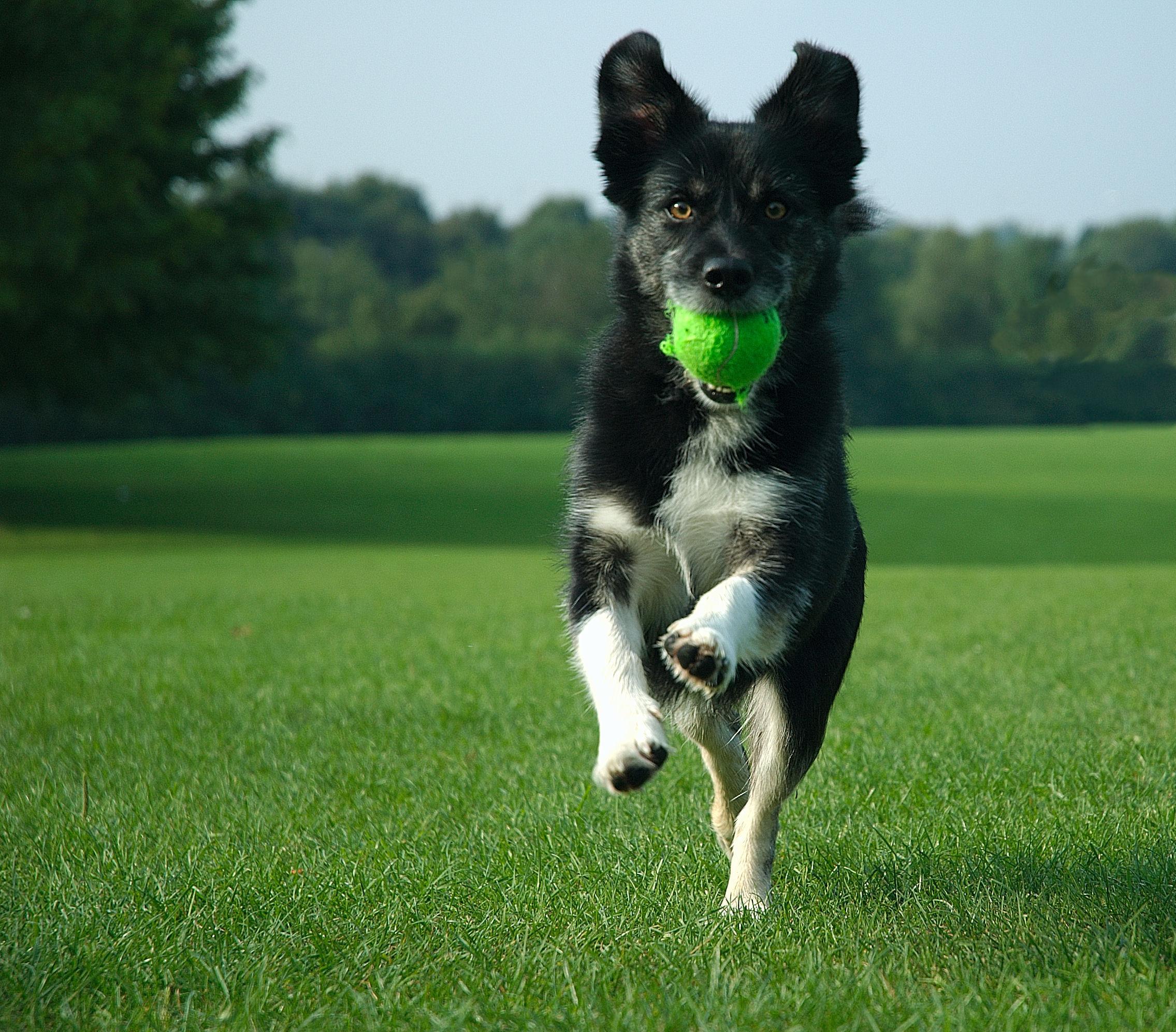 exuberant-dog-1408452 (1)